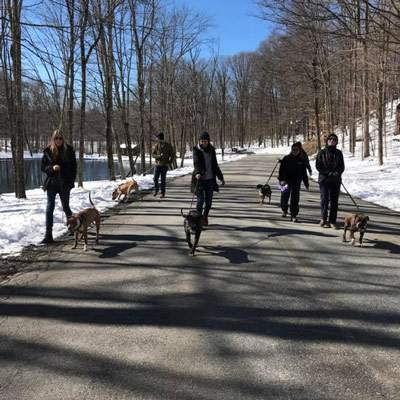 A Walk in the Park Dog Walk