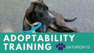 Adoptability Training @ The Humane Society of Walden | Walden | New York | United States