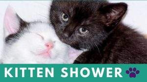 Kitten Shower @ Humane Society of Walden NY