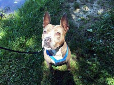 Home Page - Humane Society of Walden