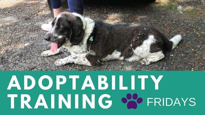 Adoptability Training – Fridays