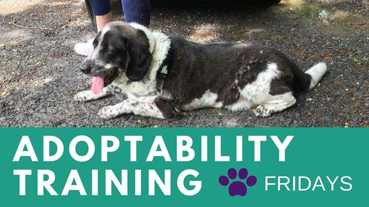 Adoptability Training – Fridays