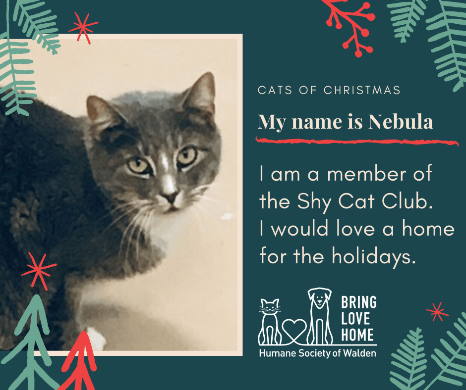 4 days until Christmas – Nebula