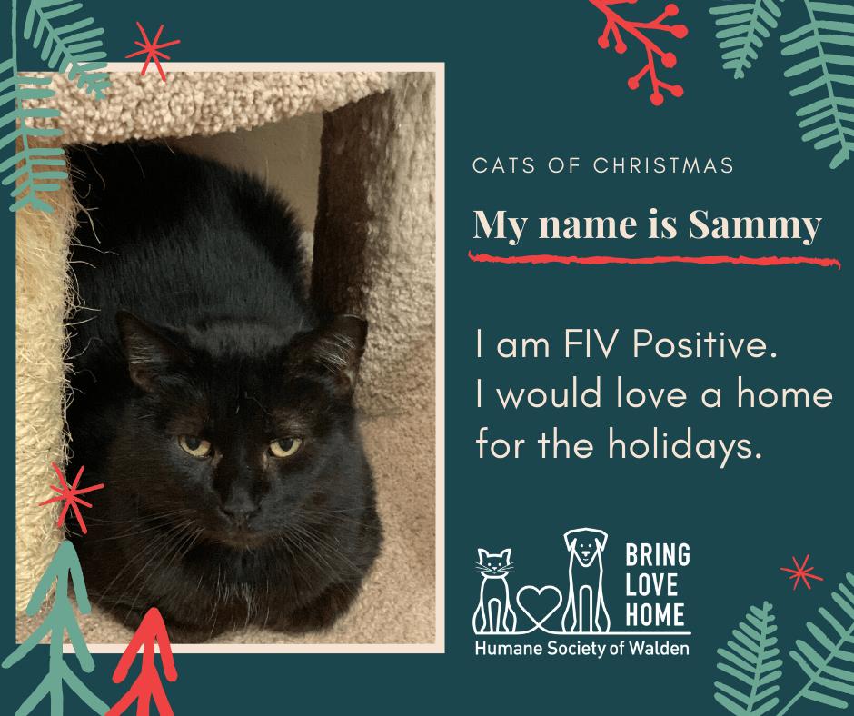 6 days until Christmas – FIV+ cats Riley & Sammy