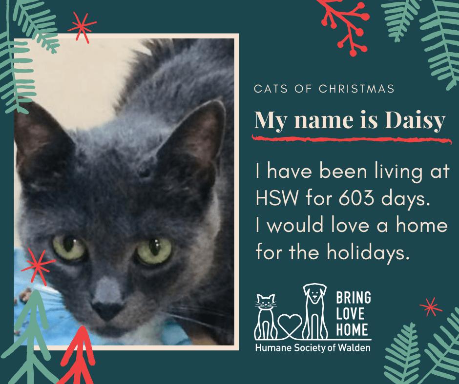 10 days until Christmas – Daisy
