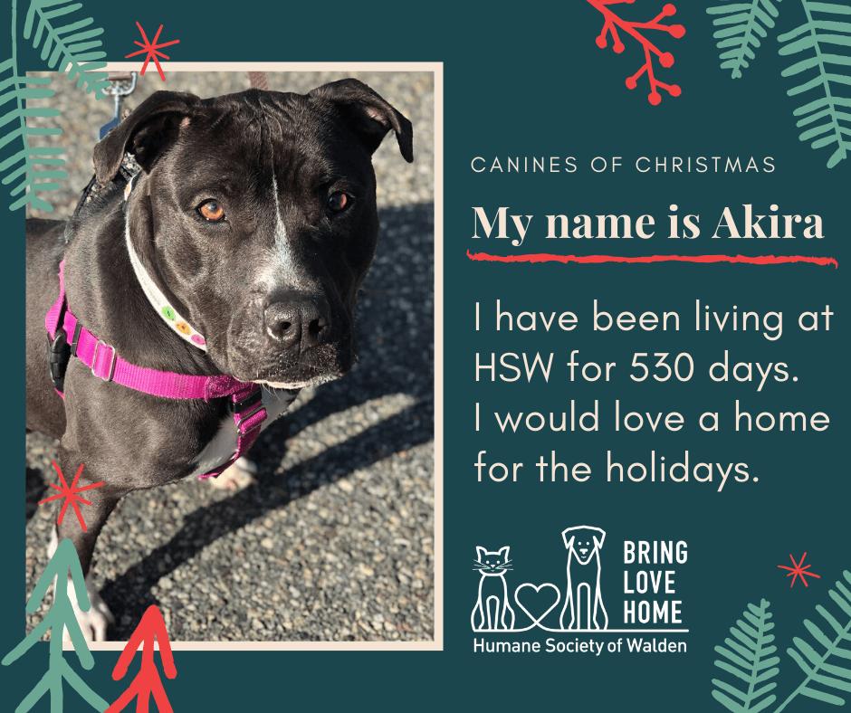 15 days until Christmas – Akira