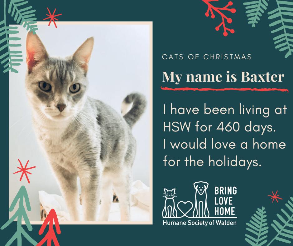 16 days until Christmas – Baxter