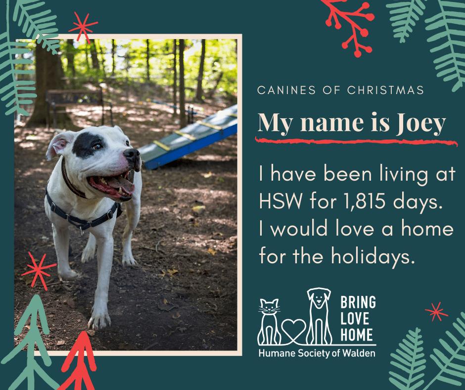 17 days until Christmas – Joey