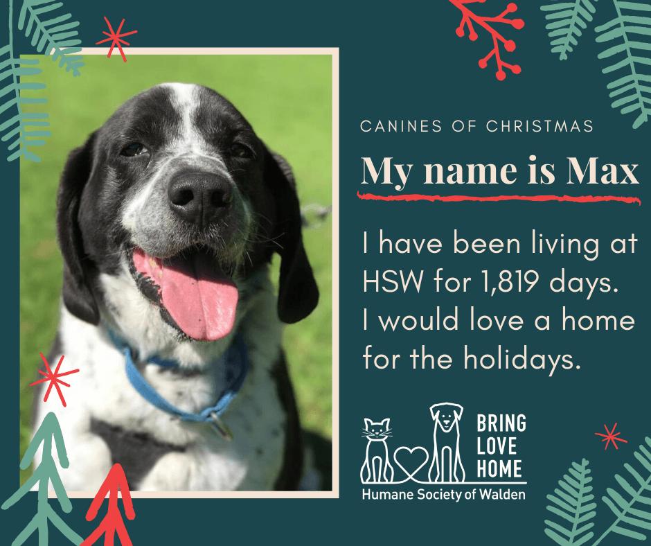 19 days until Christmas – Max