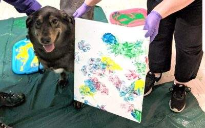 PAWS: An Exhibit of Art….Made by Dogs!!